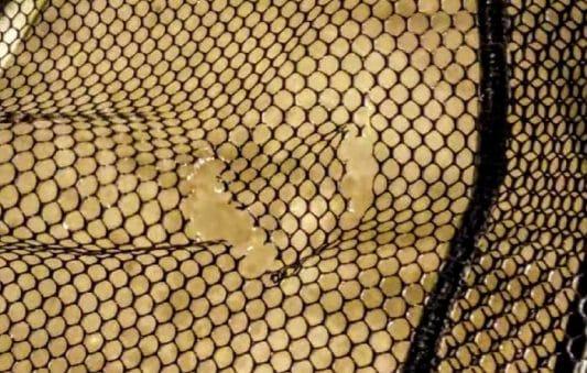 Zip Tie Fishing Net Repair Hack