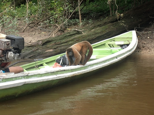 Amazon River Kayak Adventure