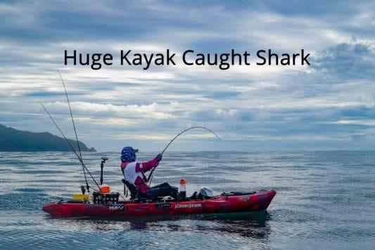 Huge Los Buzos Shark