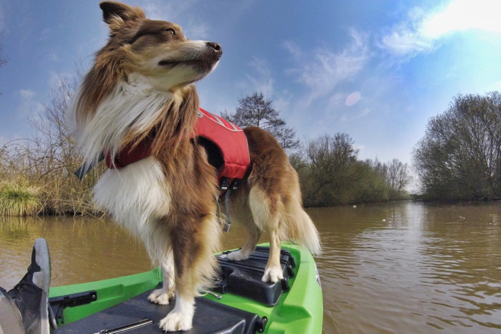Learn How To Kayak With a Dog