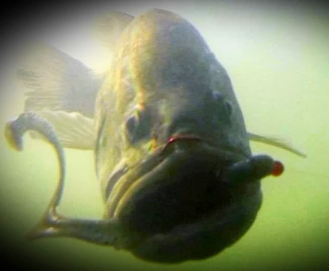 Winter Bass Fishing Tips