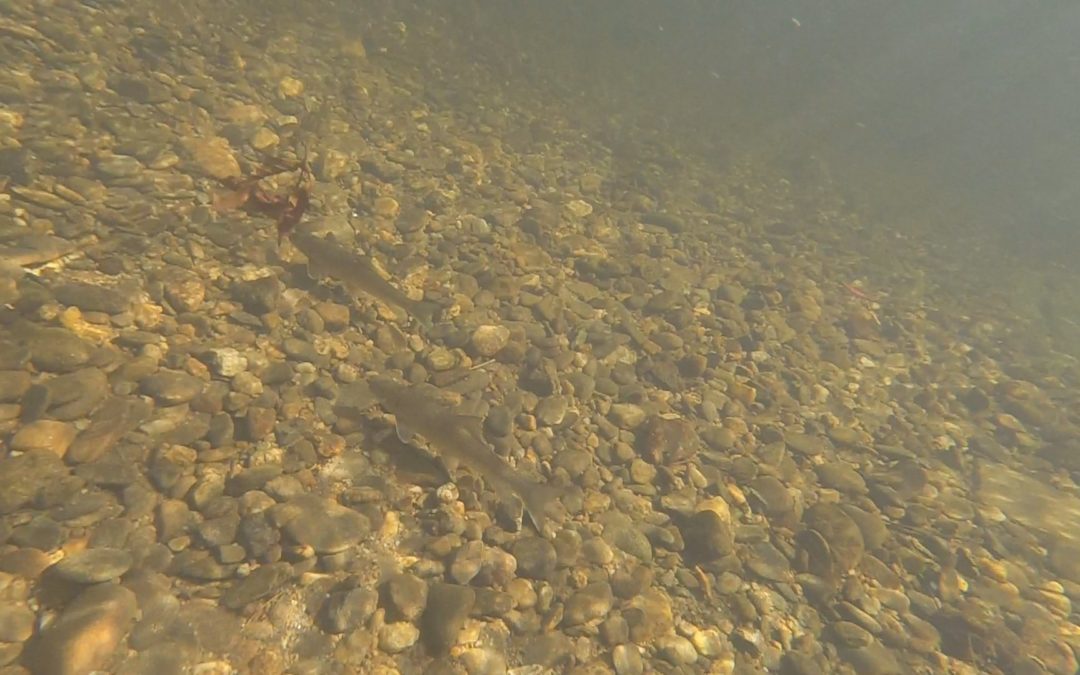 Trout Management | Delayed Harvest