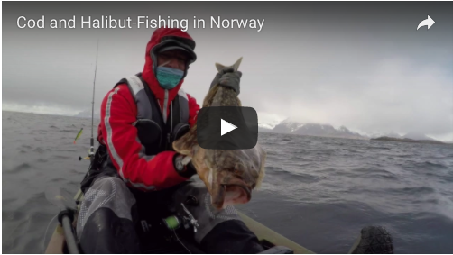 Cod and Halibut-Fishing in Norway
