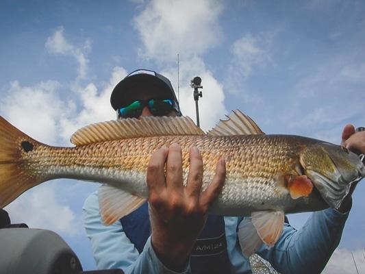 Thirty-One | LA Redfish Report