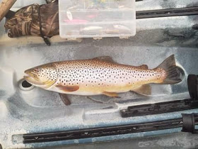 Big Water Trout