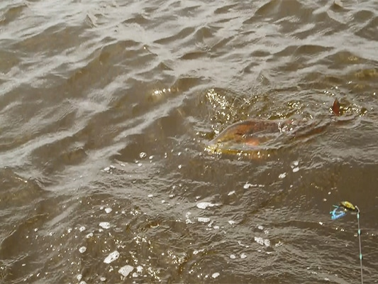 Inshore Sight Fishing   Why?