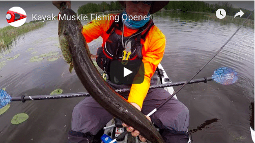 Muskie Opener From The Jackson Mayfly