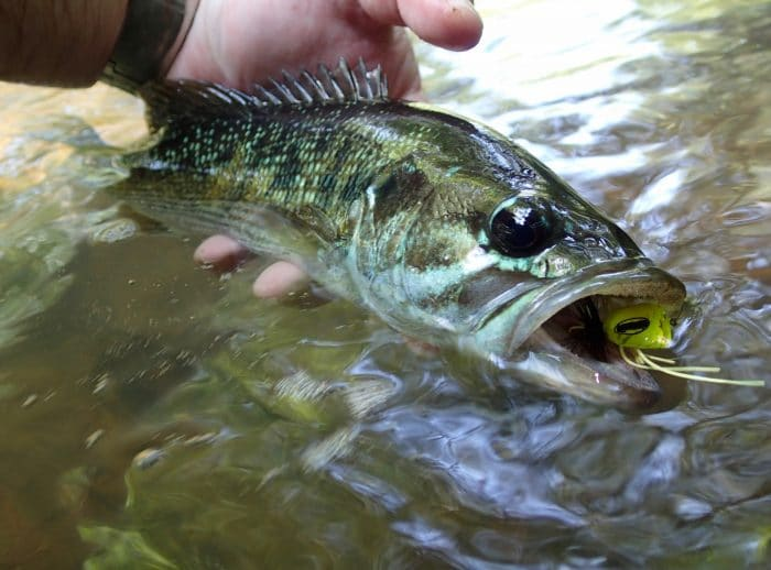 Brief History Of Black Bass Management in the US