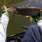 Spring Bass Fishing With Bonus Pike