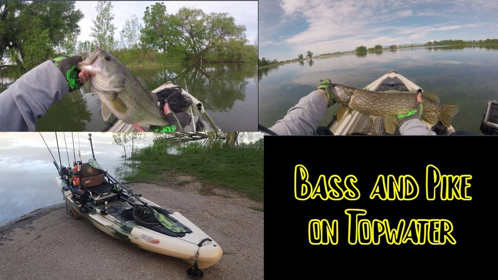 Bass and Pike on Topwater